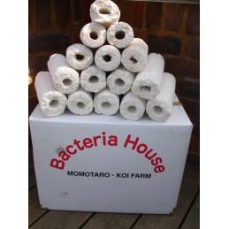 Real Momotaro Bacteria...