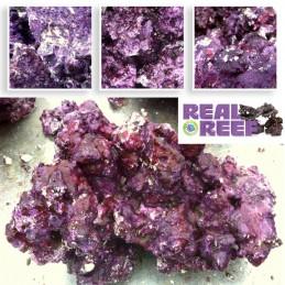 Real Reef Rock (60 lb) Box...