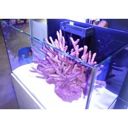 Walt Smith Reef Rock Show...